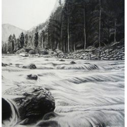 Rocky Mountain Pines