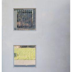Backyard Reflections