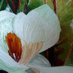Magnolia Paradise Wide